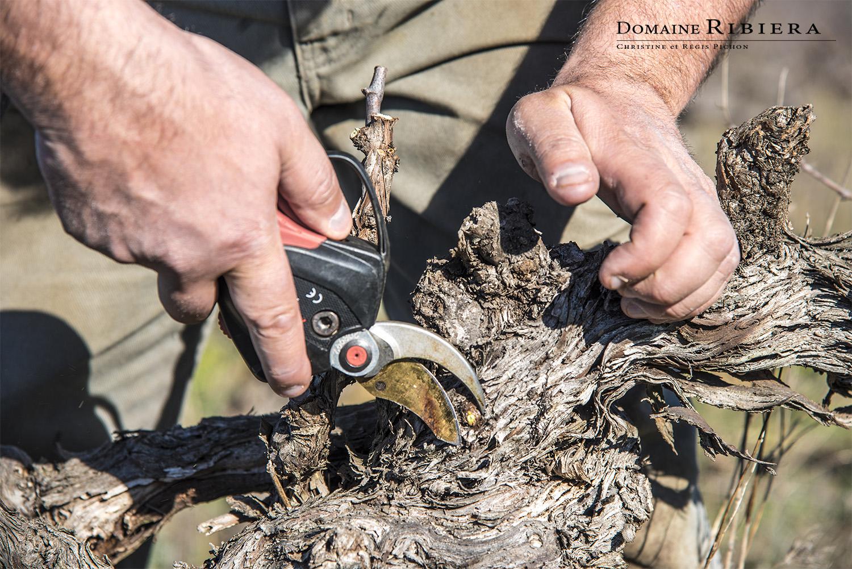 mieux utiliser ses outils pour tailler la vigne