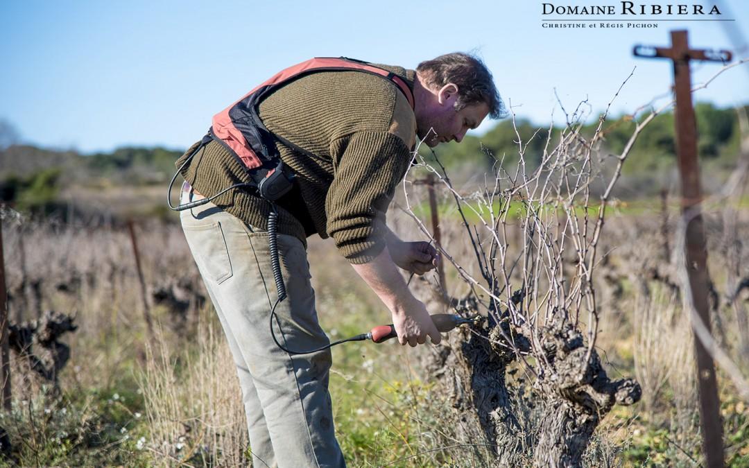 L'hiver, travail de la taille de la vigne